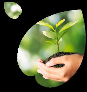 Eco-Brands